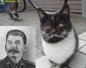 Stalin should have learned from his cat alter-ego guides