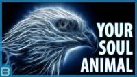 What is your spirit animal… or be guided by principles