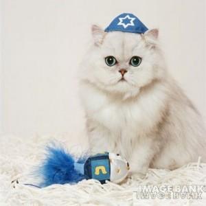 yarmulka kipa skullcap cat