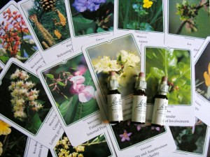 bach flower remedies to raise your vibration