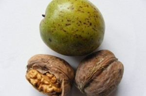 eating walnuts teaches you an important life lesson: everything that is worth having takes effort