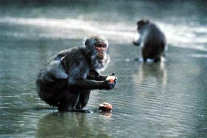 the hundredth monkeya theory for social change