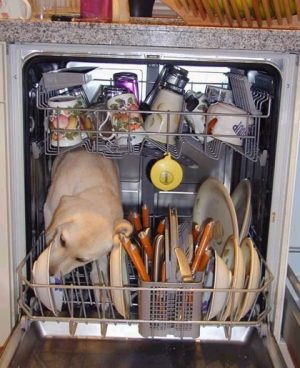dishwasher_really