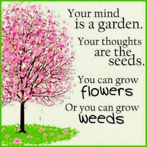 weeds-or-flowers