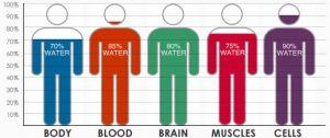 bodyhydrationchart