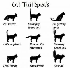 cat-tail-speak