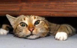 cat-under-wood1280x600