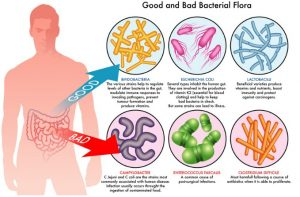 good-and-bad-bacterial-flora