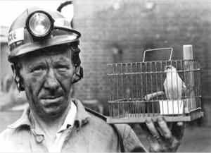 coalminerscanary