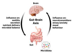 gut-brain_axis_large