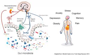 neuroendocrine_system_grande