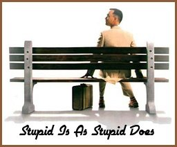 Stupid is as stupid does… the saying that was at the root of me raising my vibration