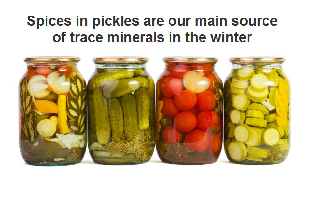 spices in pickles are our main source of trace minerals in winter