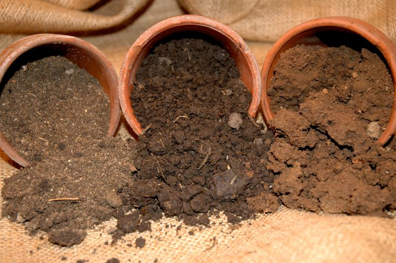 soil-types-who-you-are will grow or not