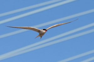 soaring method