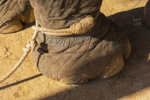 thin rope on elephant is like your anchor to doom