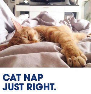 joy: just the right amount of sleep