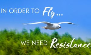 in order to fly you need resistance