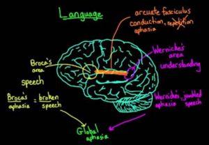 language centers broca
