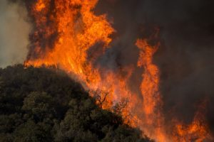 it didn't occur: wildfire... it happened
