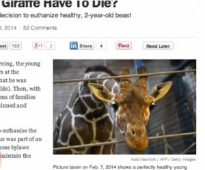 did the giraffe have to die in copenhagen zoo?