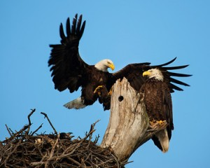 Christmas of Eagles