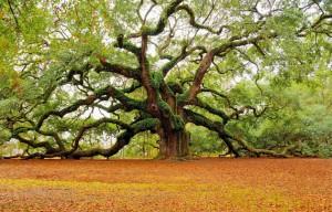 Beautiful-Tree-Photography-15
