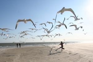 Flock_of_Seagulls_eschipul