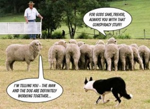 from the sheep's point of view