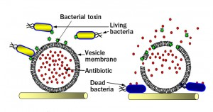 bacterial-toxin