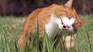 cat-eating-grass