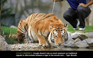 tiger in the woods or tiger woods