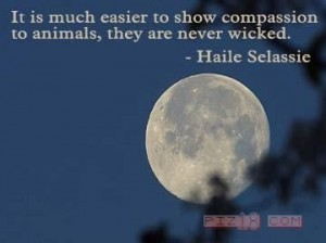 transform yourself to activate compassion