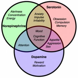 dopamine, serotonin, Acetylcholine