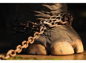 elephant-rope