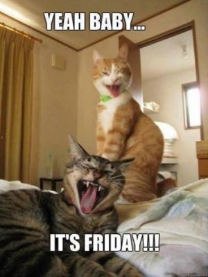 friday-cats-348x465