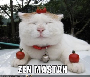funny-pictures-cat-is-zen-master