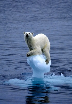 iceberg-polar-bear