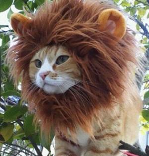 lion-cat-hat1-640x533