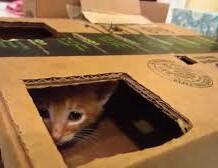 livinr-in-a-box