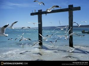 mainland-seagulls-76941-sw