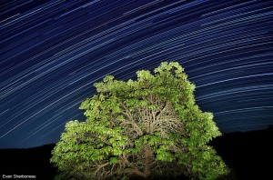 star-trails-long-exposure--with-light-painting-nature-tree