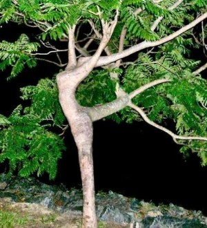 treeoflifegoddess