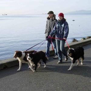 walking3dogs